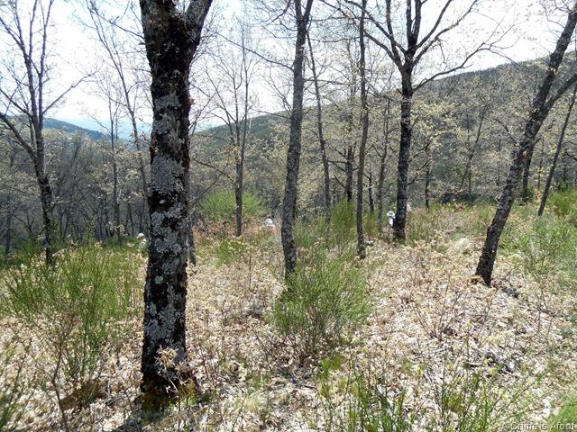 Miraflores de la Sierra 233